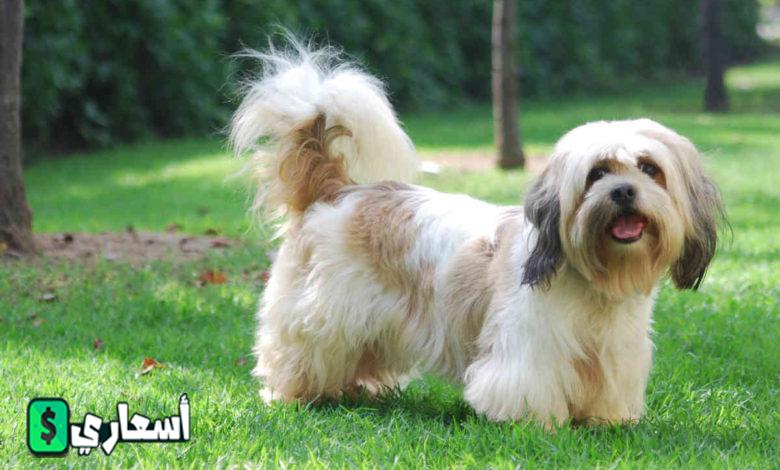 صور كلاب اللولو
