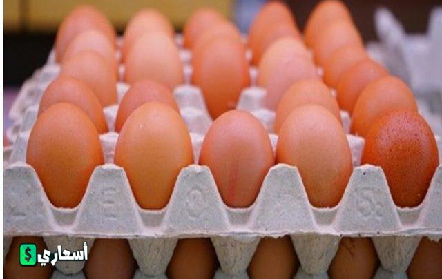 بورصة البيض واسعار البيض اليوم